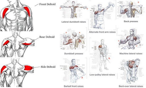 Top 5 Exercises To Build Shoulder Muscles